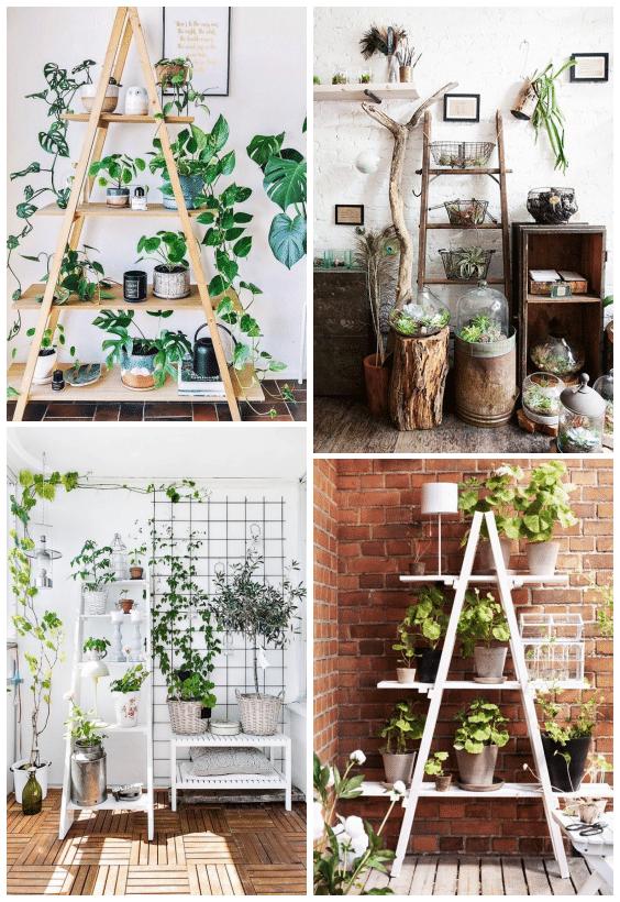 échelle décorative plantes