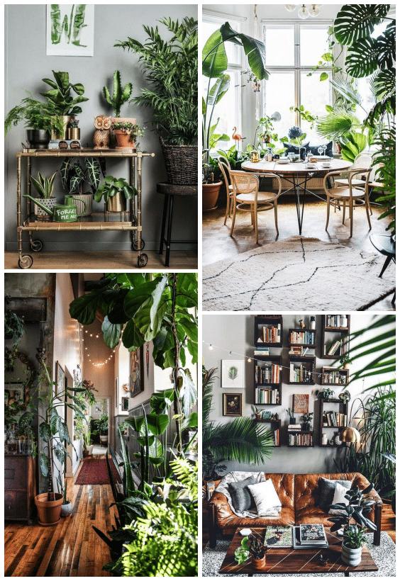 décoration jungle plantes