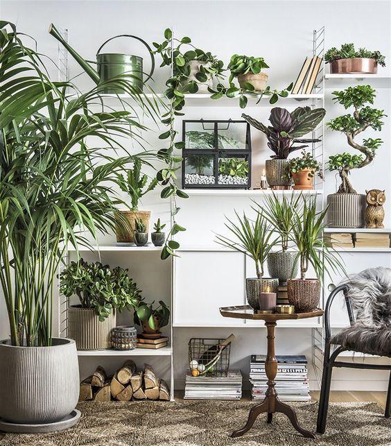 etagere-plantes-interieure-salon