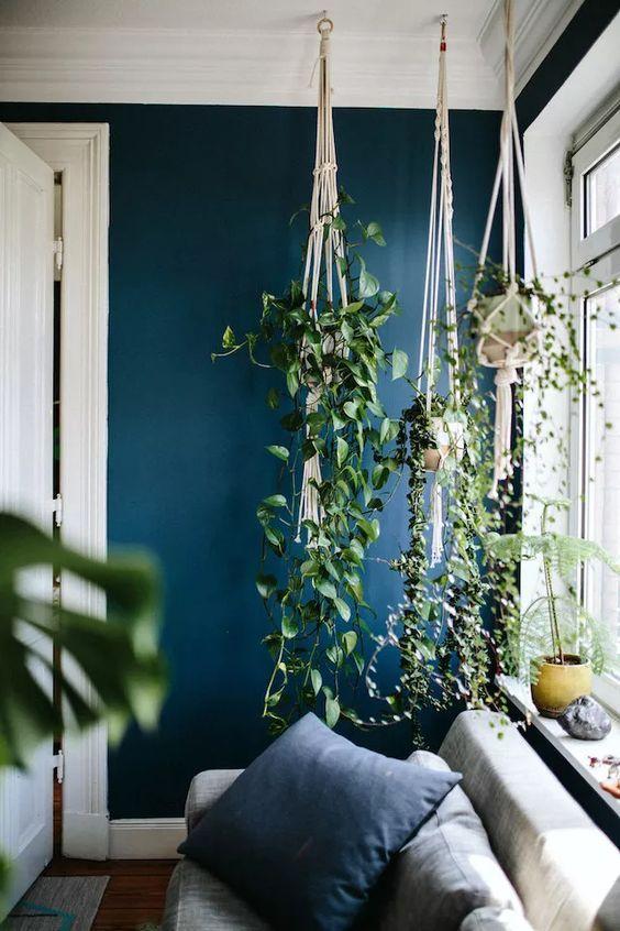 plante intérieur décoration