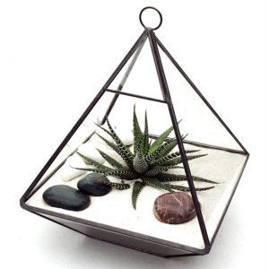 terrarium nature et découvertes