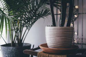 decoration_plante_pot_verdure_indoor