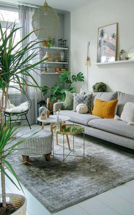 décoration plante dans salon
