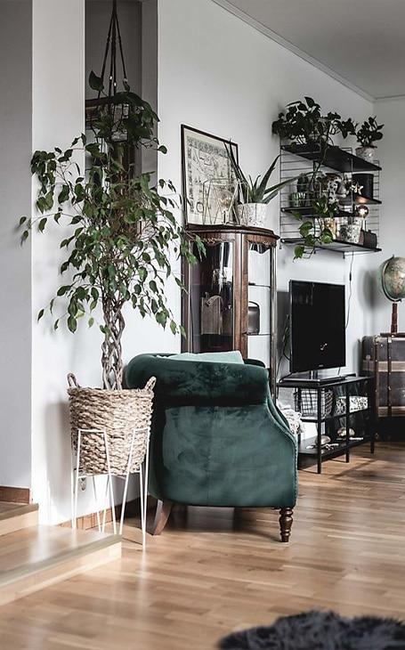 salon jungle