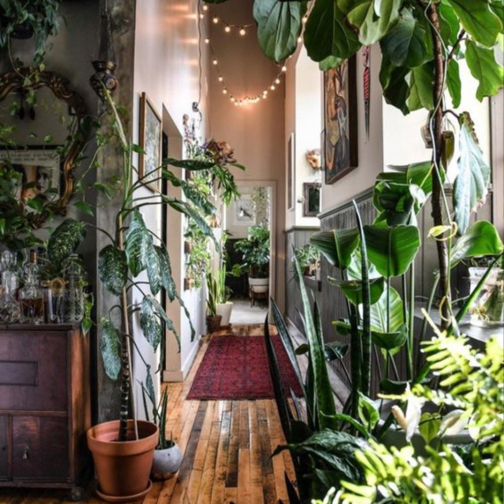 végétation salon