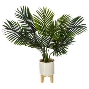 plante déco jungle