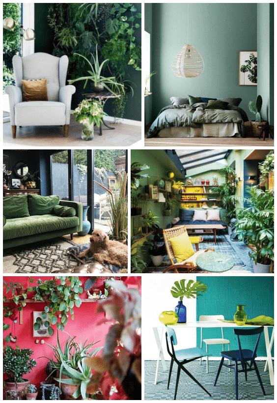 couleurs déco jungle