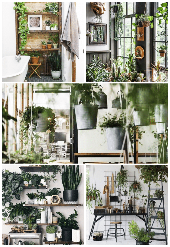 plantes déco urban jungle