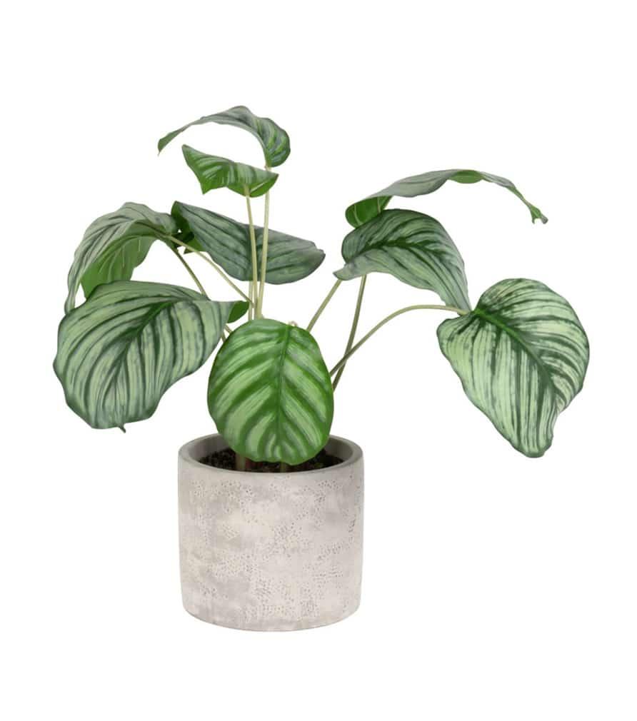 Plante artificielle Calathéa