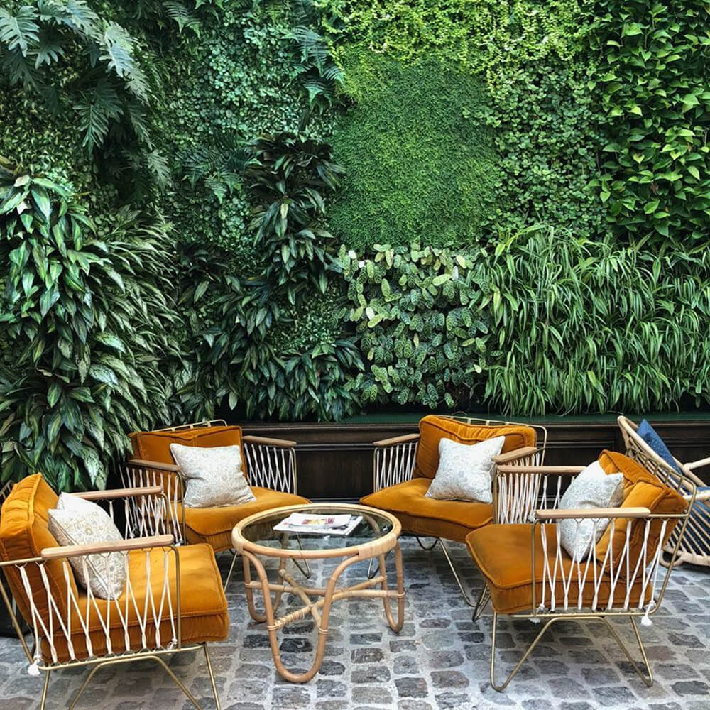 patio plantes