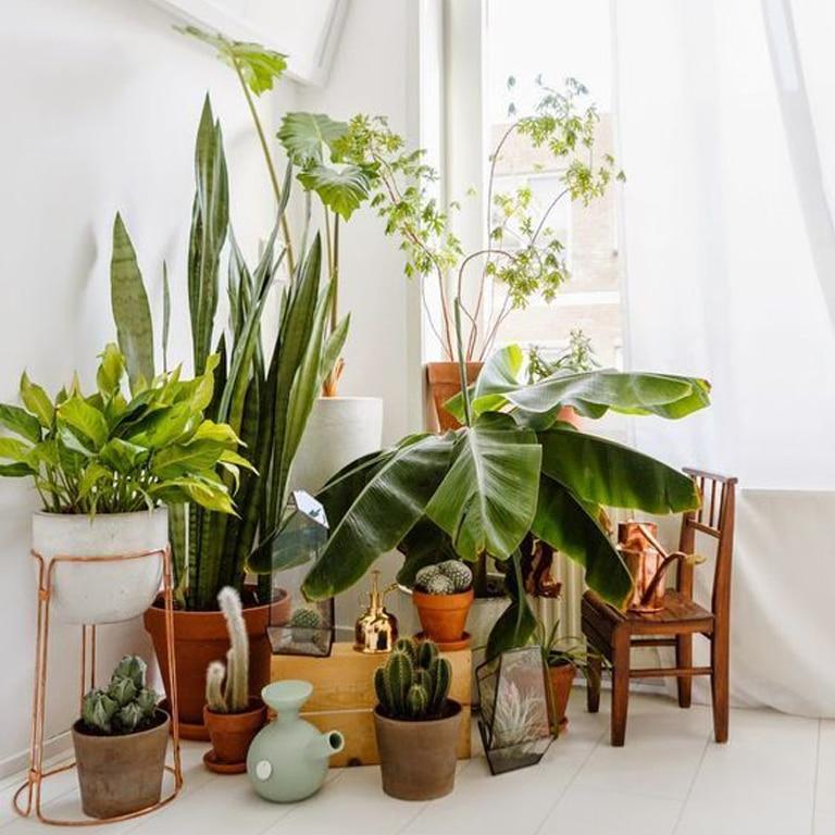 décoration vase plantes