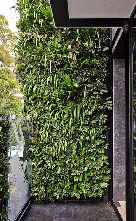 mur de plantes jardin
