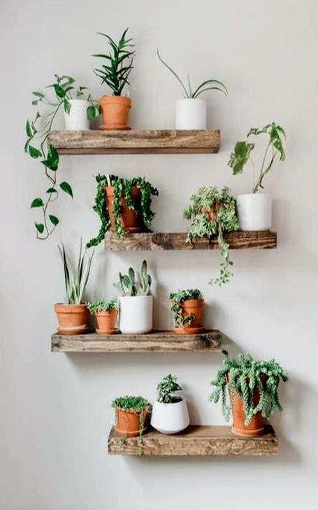 décorations intérieure plantes