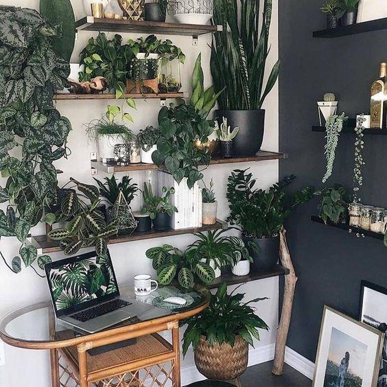 déco plantes appartement