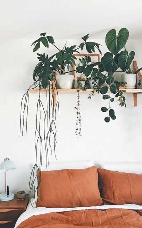 déco chambre jungle plantes