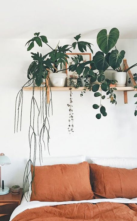 idées déco plantes chambre