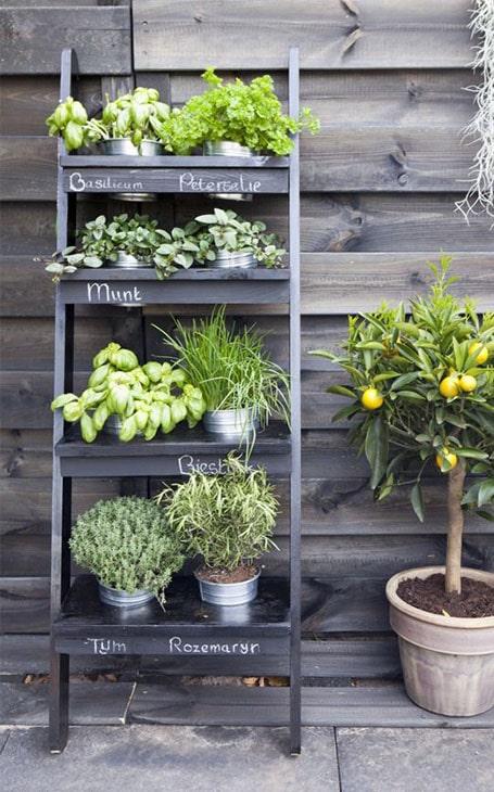 échelle plantes