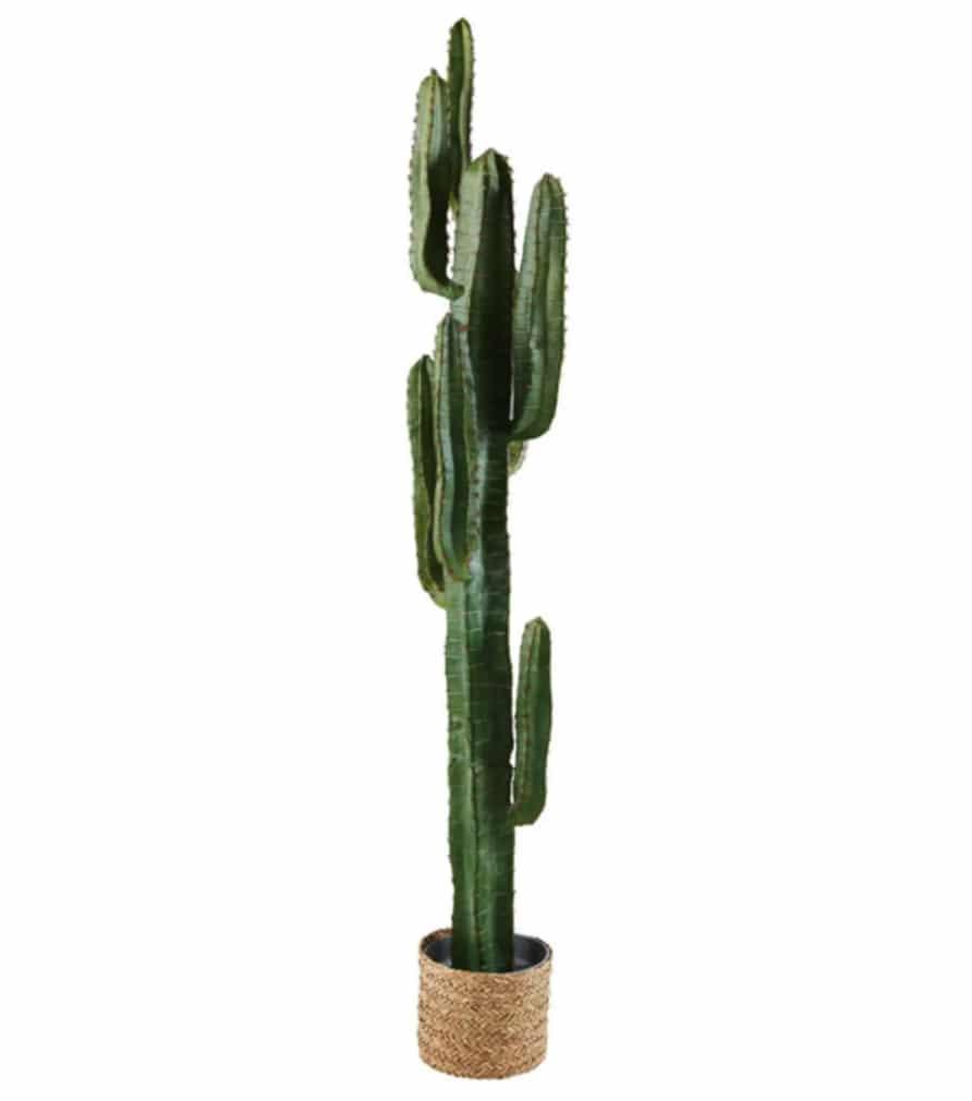 Cactus COLORADO