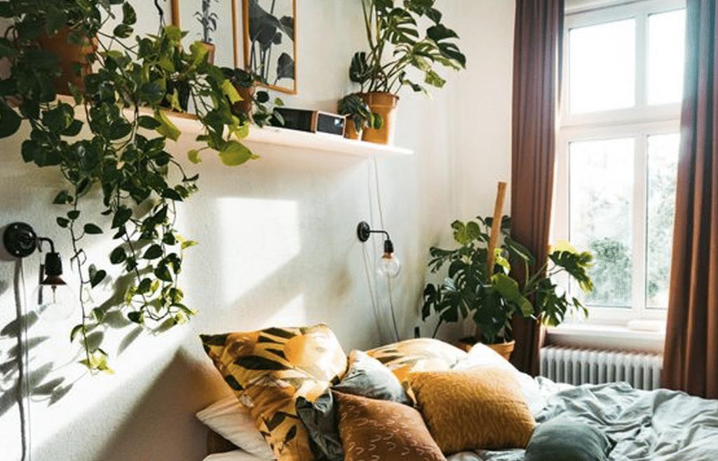 plante appartement chambre