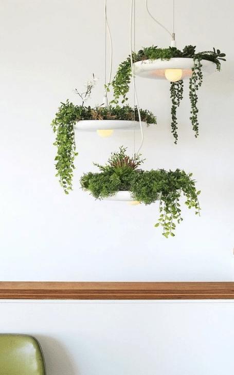 plante appartement luminaire