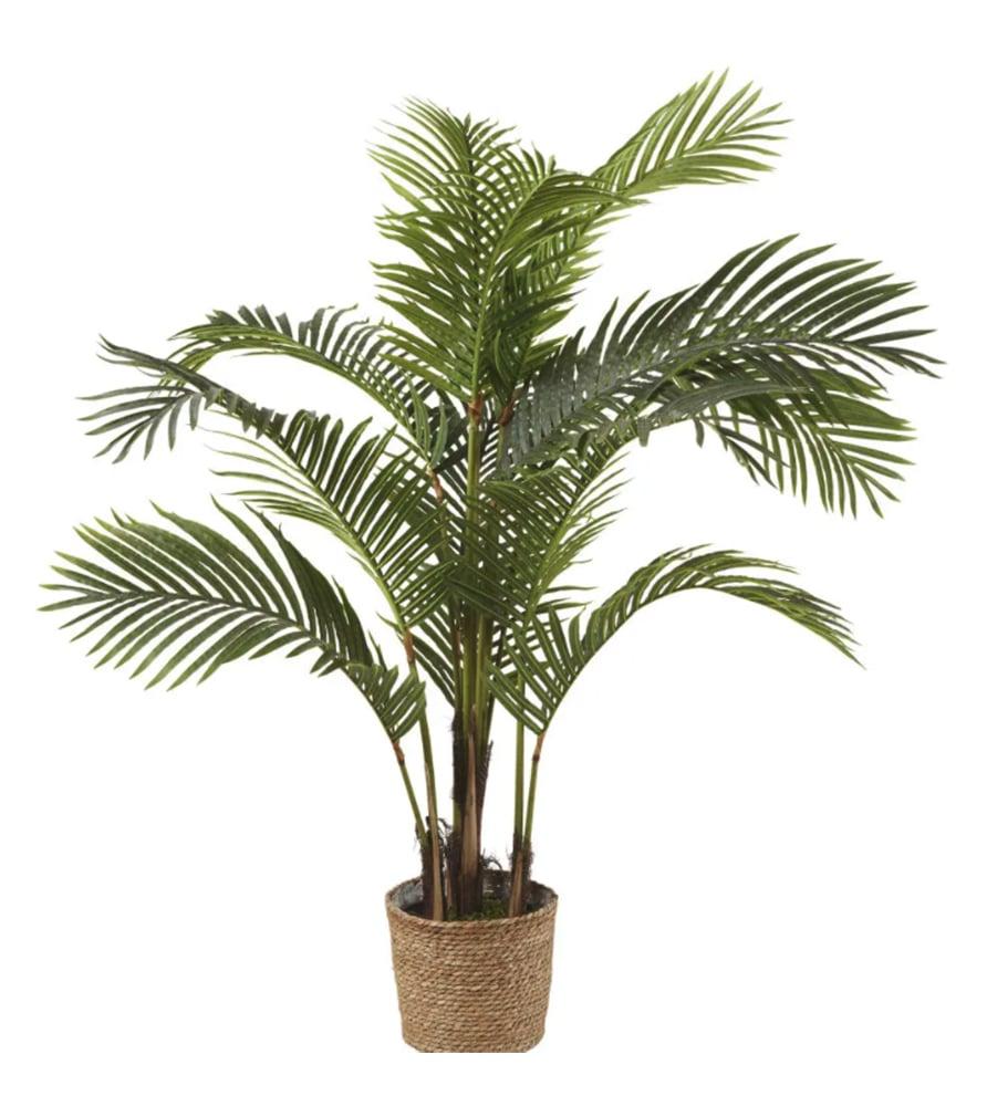 Plante MAJESTY
