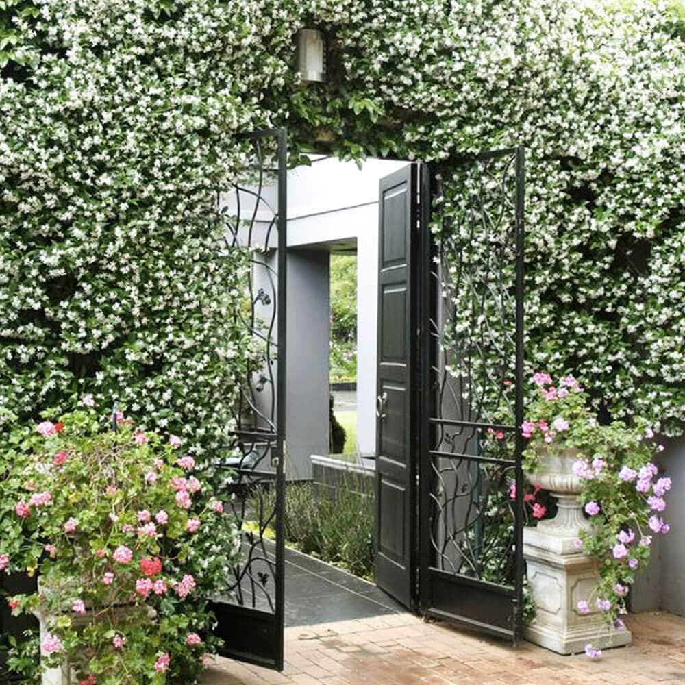 jardin fleuri plantes grimpantes