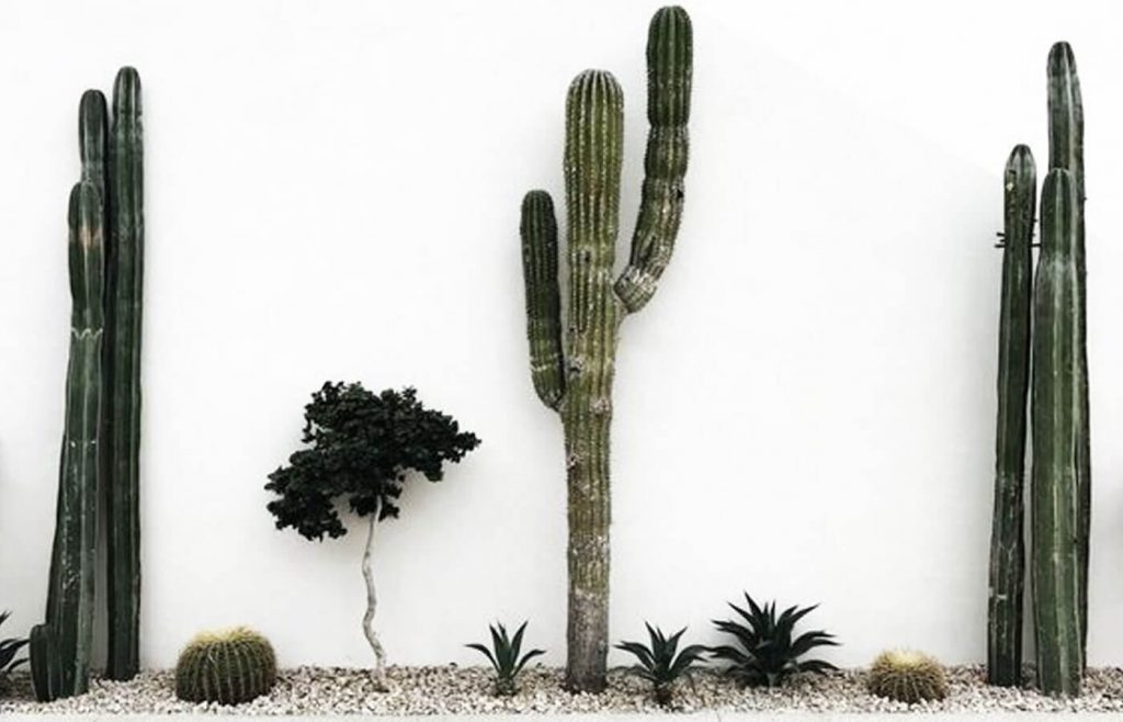 cactus deco jardin pinterest