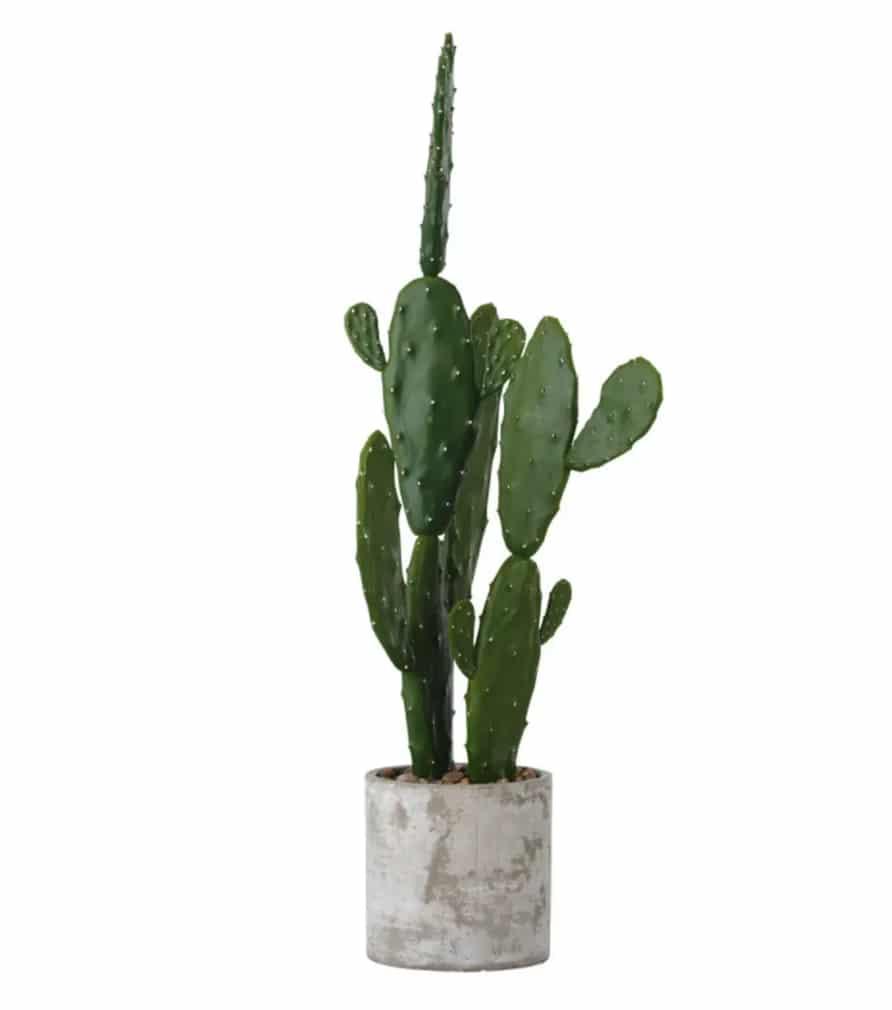 Cactus ADELA