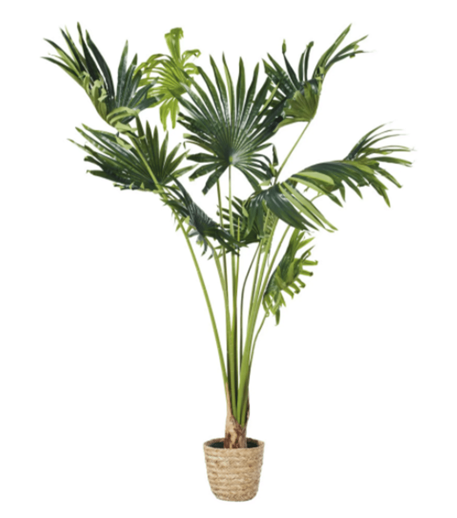 KOLOA - Palmier artificiel