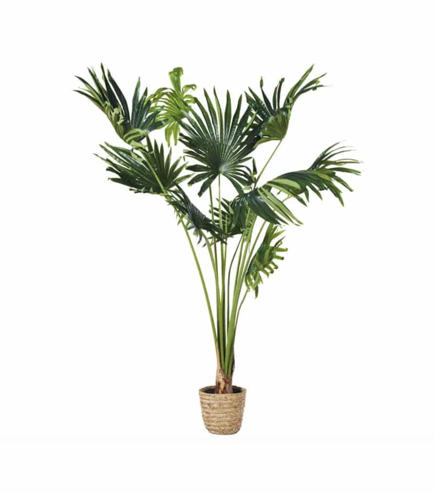 Plante KOALA