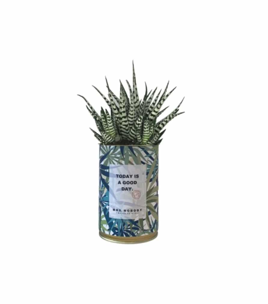Cactus MINIMAL